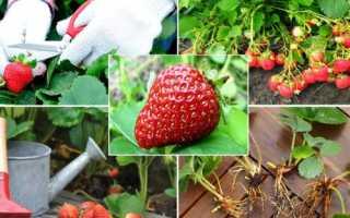 Подкормка клубники осенью: особенности, виды удобрений, чем и когда прикармливать, инструкция по удобрению