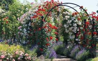 Удобрение для роз: чем удобрять розы осеню, как приготовить удобрения, сколько и как правильно вносить