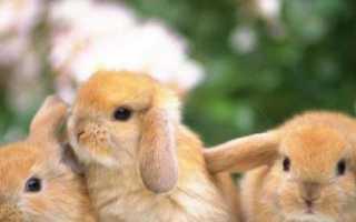 Клички для кроликов: как можно назвать девочку, мальчика, как придумать милые имена, как приучить к кличке