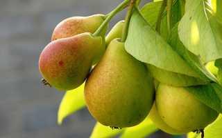 Груша Северянка Краснощёкая: описание и характеристика, агротехника выращивания, уход, фото