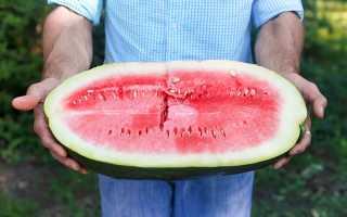 Арбуз при холецистите: химический состав и калорийность, польза и вред, правила и нормы употребления