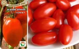 Томат Княгиня: характеристика и описание сорта, урожайность, выращивание и уход, фото