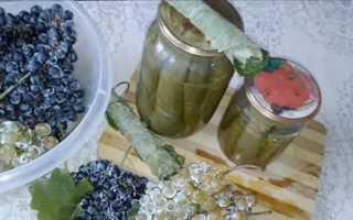 Как мариновать листья винограда на зиму: лучшие рецепты, как использовать и что можно готовить, видео