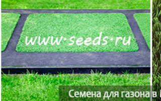 Как подсеять газонную траву в проплешины: почему они образуются, как правильно подсевать траву летом и осенью на