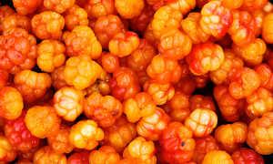 Варенье из морошки: несложные рецепты, как варить его без сахара, польза и вред, отзывы