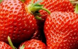 Клубника Флоренс: описание и характеристика сорта, особенности ухода и выращивания, фото