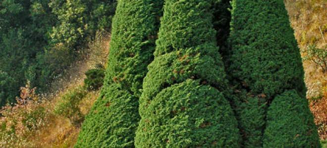 Итальянский сад в ландшафтном дизайне: фото загородного дома в итальянском стиле, использование водоёмов, мощение и дорожки, оформление