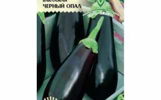 Баклажан Чёрный опал: описание, характеристика и выращивание, фото