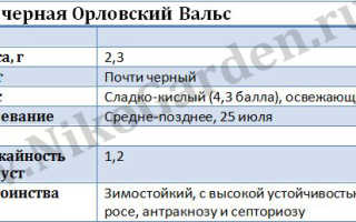 Поздний сорт чёрной смородины Орловский вальс: внешний вид и описание сорта, фото, отзывы