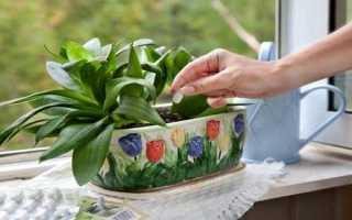 Как поливать гортензию: верхний и нижний полив розовой гортензии лимонной кислотой и уксусом, пропорции