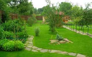 Уход за рулонным газоном: как ухаживать после укладки, как часто нужно поливать весной и летом, первая стрижка
