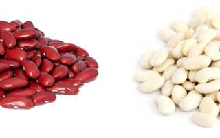 Какая фасоль полезнее — белая или красная? Отличия, описание и калорийность