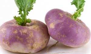 Можно ли есть репу сырой: её полезность и недостатки, пищевая ценность, противопоказания, как правильно употреблять