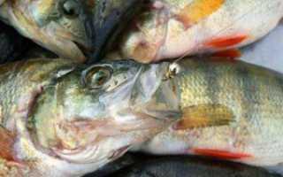 Мормышка «Нимфа»: как правильно сделать своими руками, характеристики, для ловли каких рыб используется, техника ловли