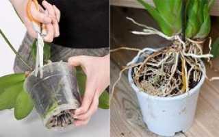 Посадка орхидеи в домашних условиях: основные способы, правильная обработка грунта, уход после посадки, фото, видео