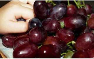 Виноград «Марадона» (Шоколадный): описание сорта, фото, отзывы