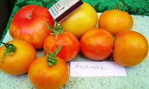 Томат Ананас: характеристика и описание сорта, фото, урожайность, выращивание и уход в открытом грунте, фото