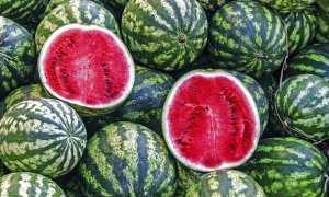 Арбуз Астраханский: описание и характеристика сорта, выращивание и уход, особенности плода, фото