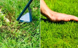 Универсальный рулонный газон: применение в ландшафтном дизайне, описание и состав травосмеси, посадка и уход за газоном
