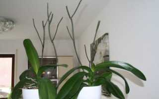 Что делать, когда отцвела орхидея фаленопсис: как обрезать и как ухаживать дальше, фото, видео