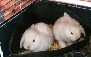 Как приучить кролика к лотку: можно ли это сделать, эффективные методы