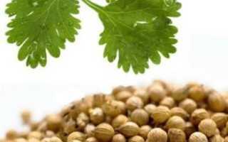 Эфирное масло кориандра: характеристика и полезные свойства, возможные противопоказания, особенности применения