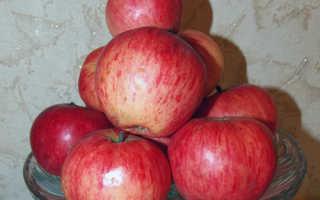 Яблоня Башкирский красавец: описание и характеристика сорта, особенности выращивания дерева на участке, фото