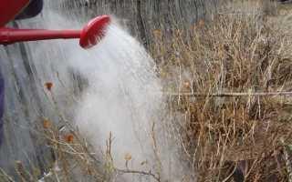 Когда и как обливать смородину кипятком весной от болезней и вредителей: правила обработки, как правильно опрыскивать