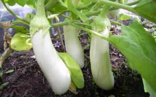 Белые баклажаны: сорта, выращивание и уход, фото