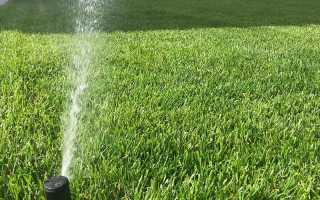 Какой газон лучше: посевной или рулонный, их характеристики и требования, преимущества и недостатки, плюсы и минусы