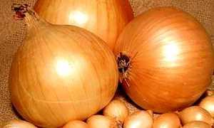 Лук Трой: описание сорта, характеристика и выращивание, как ухаживать, фото
