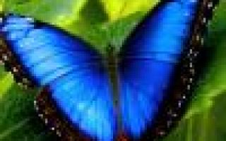 Камелия японская (цветок): уход в домашних условиях, фото