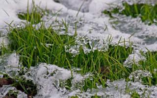 Уход за газоном осенью и его подготовка к зиме: нужно ли стричь и когда последний раз косить,