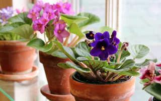 Размножение фиалок листом в домашних условиях: пошаговая инструкция, оптимальные сроки, дальнейший уход, фото, видео