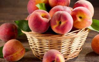 Посадка персикового дерева: когда лучше всего садить, схема посадки, соседство с другими деревьями, уход за персиками