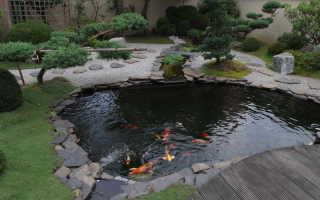Пруд для разведения рыбы своими руками: как сделать водоём на приусадебном участке, как развести рыбу на даче