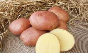 Картофель Журавинка: описание и характеристика сорта, вкусовые качества, выращивание и уход, фото