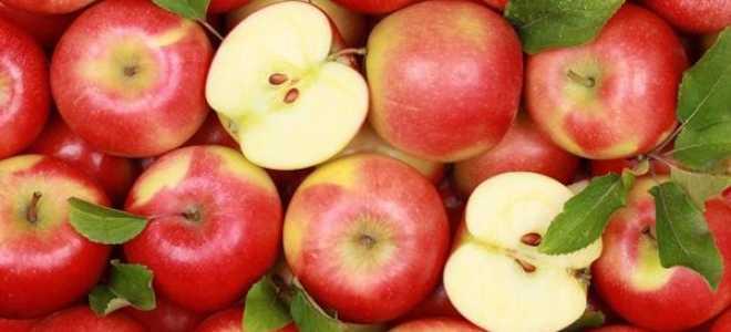 Заготовки из яблок: самые популярные рецепты, способы хранения