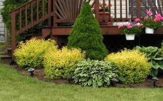 Что посадить рядом с ёлкой на даче, в саду, можно ли посадить цветы под елью, фото