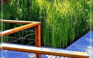 Устройство биоплато для пруда: как сделать своими руками, с насосом и без него, растения для биоплато, очистка