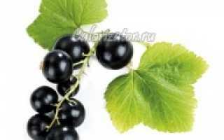 Чёрная смородина: полезные свойства и противопоказания для здоровья, калорийность, витамины, БЖУ