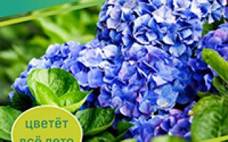 Цветущий газон: как правильно посадить газонные цветы своими руками, фото цветочной травы