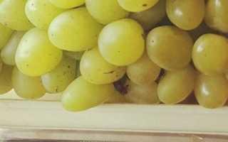 Виноград Галахад: описание сорта и фото, уход, отзывы