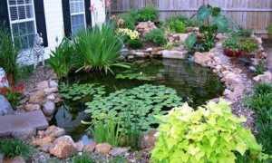 Как сделать воду в пруду прозрачной: как добиться, чтобы вода в дачном пруду стала голубой
