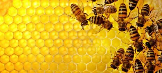 Новое в пчеловодстве: технологии и методики, видео