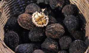 Чёрный орех: характеристика растения, польза, применение, фото