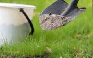 Подкормка сливы: уход, сроки, особенности дальнейшего выращивания