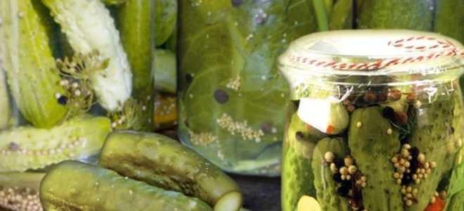 Огурцы солёные на зиму с горчицей: рецепты заготовок, полезные советы