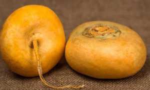 Репа польза и вред для здоровья здоровья мужчин – особенности применения