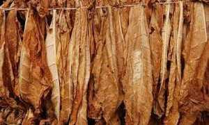 Как измельчить табак в домашних условиях: основные способы, как правильно подготовить листья табака